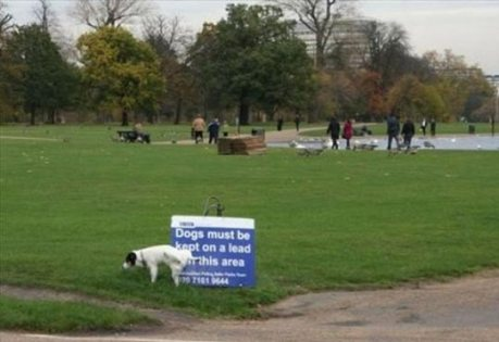 dog-versus-sign